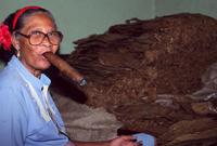 Cigar maker Havana Cuba